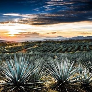 wishing our fearless leader, Jacqueline, a happy birthday! here is to you, and many beautiful tequila sunsets!