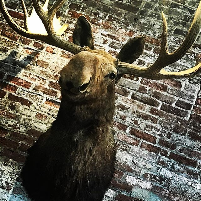 back for a week, discovering all sorts of great new places in town, like the @gardenandgun #circle7 store! Jack is pretty sweet too (not the moose, the manger )