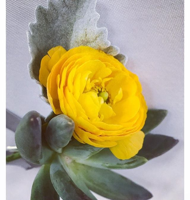 a little sunshine for your thursday | these little beauties from an event we designed + planned for our fave #cliEnt @michellewoodllc + bae🌞#stopandsmelltheflowers #rannunculus #succulents #tulips #gardenroses #roses #hellowyellow #happy #sunshinelove….#charlestonevents #events #eventdesign #eventproduction #eventdraping #drape #partyplanner #inventivevents #dream #designpossible #iEworklife #inventive #environments #iE #eventplanner #chs #eventdesigner #coordination #843